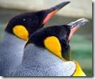 ペンギンアップデートで順位が下がった人向けの申し立てフォームが開設