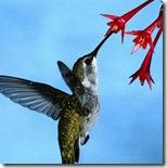 検索エンジンが目指す未来!90%に影響「Hummingbird」が実装!
