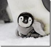 Googleでペンギンアップデート
